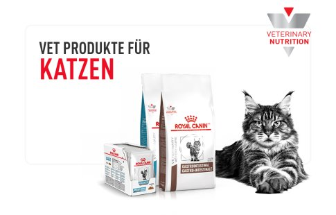 Discover all vetenary products cats Image