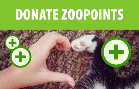 Donate zooPoints