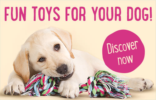 Dog Toys Training Equipment Great Deals Available Now