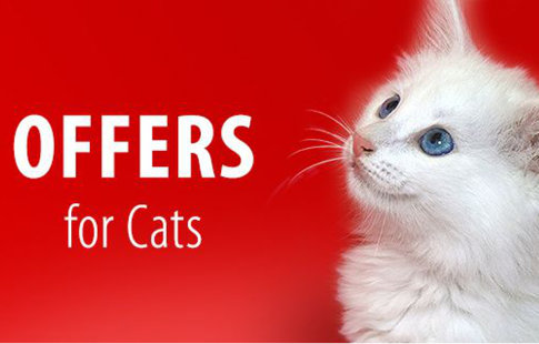 Offers for Cats