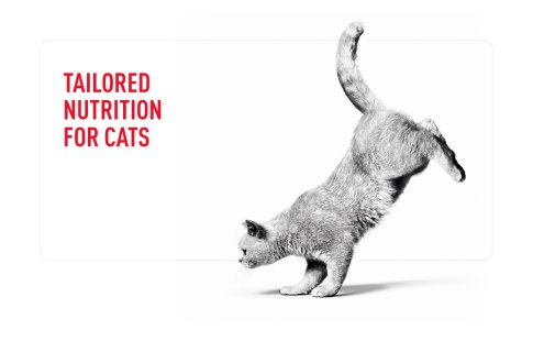 Tailored Nutrition Cats