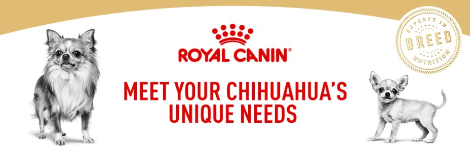 Meet your Chihuahua's unique needs