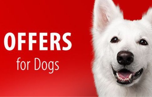 Offers for Dogs