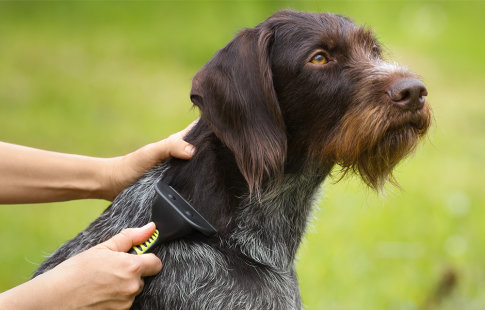 Grooming tips for dogs