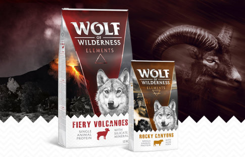 Wolf of Wilderness Elements