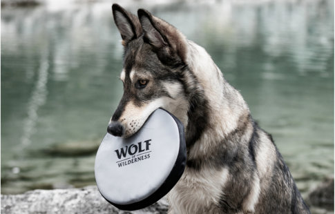 Wolf of Wilderness -frisbee