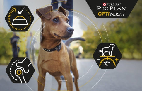Pro Plan OptiWeight para perros