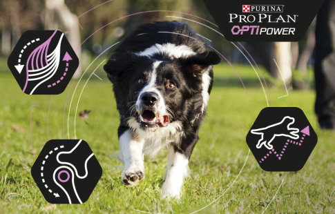 Pro Plan OptiPower para perros