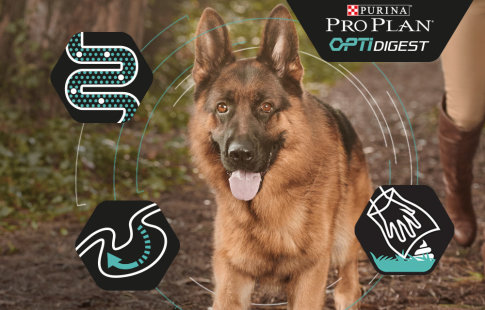 Pro Plan OptiDigest para perros