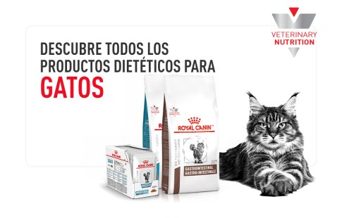 Royal Canin Veterinary gatos