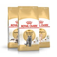 Royal Canin Breed gatos