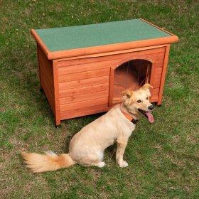 Urmăriți rasele de câini: lista de top 10 cu nume, descrieri și fotografii