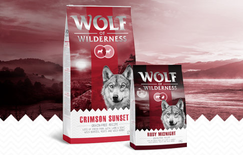 Wolf of Wilderness Red Classic