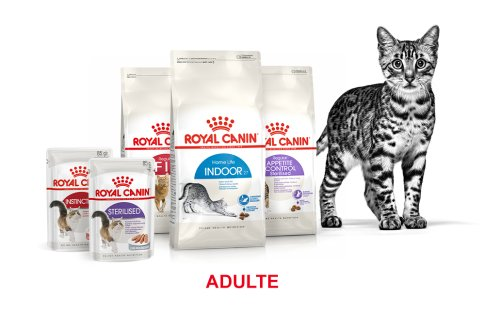 ROYAL CANIN BRAND PAGE - CAT Subpage - Grid Container - Stages of life - Adult image