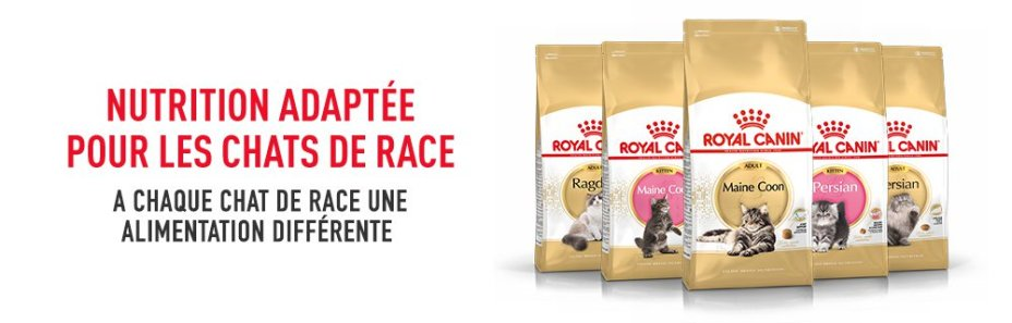 ROYAL CANIN BRAND PAGE - CAT Subpage - Middle Banner - Nutrition image