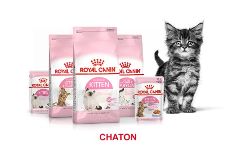 ROYAL CANIN BRAND PAGE - CAT Subpage - Grid Container - Stages of life - Kitten image