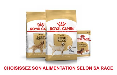 ROYAL CANIN BRAND PAGE - DOG Subpage - Grid Container - Breed image