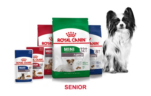 ROYAL CANIN BRAND PAGE - DOG Subpage - Grid Container Way of life - Senior image