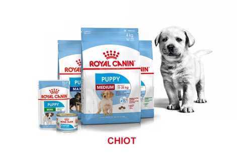ROYAL CANIN BRAND PAGE - DOG Subpage - Grid Container Way of life - Puppy