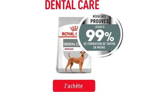 Royal Canin Canine Care Subpage - Grid Dental Care Image