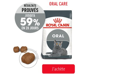 Royal Canin Feline Care Subpage - Grid Oral Care Image