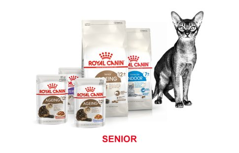 ROYAL CANIN BRAND PAGE - CAT Subpage - Grid Container - Stages of life - Senior image