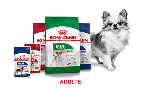 ROYAL CANIN BRAND PAGE - DOG Subpage - Grid Container Way of life - Adult image