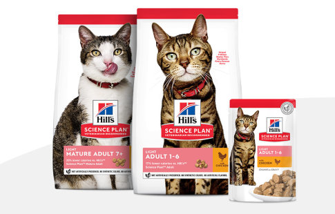 Hill's Science Plan Light pour chat