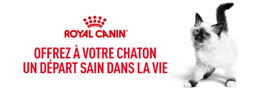 Royal Canin Kitten Subpage - Top Middle banner Image