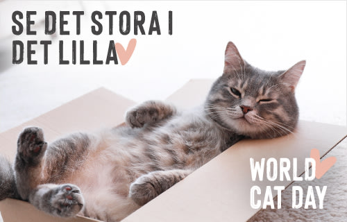 World cat day hos zooplus.se