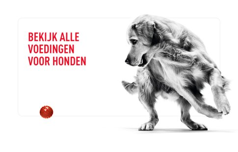 Royal Canin hond